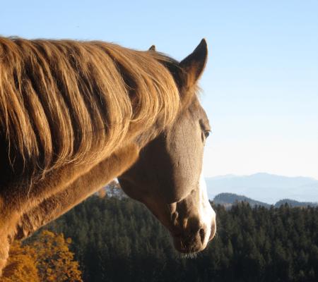 Pferd blickt in einer bessere Zukunft für Pferde