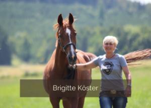 Pferde akupunktieren mit Brigitte Köster