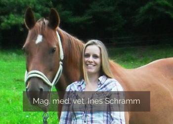 Nützliche Tipps für den Pferdekauf mit Mag. med. vet. Ines Schramm
