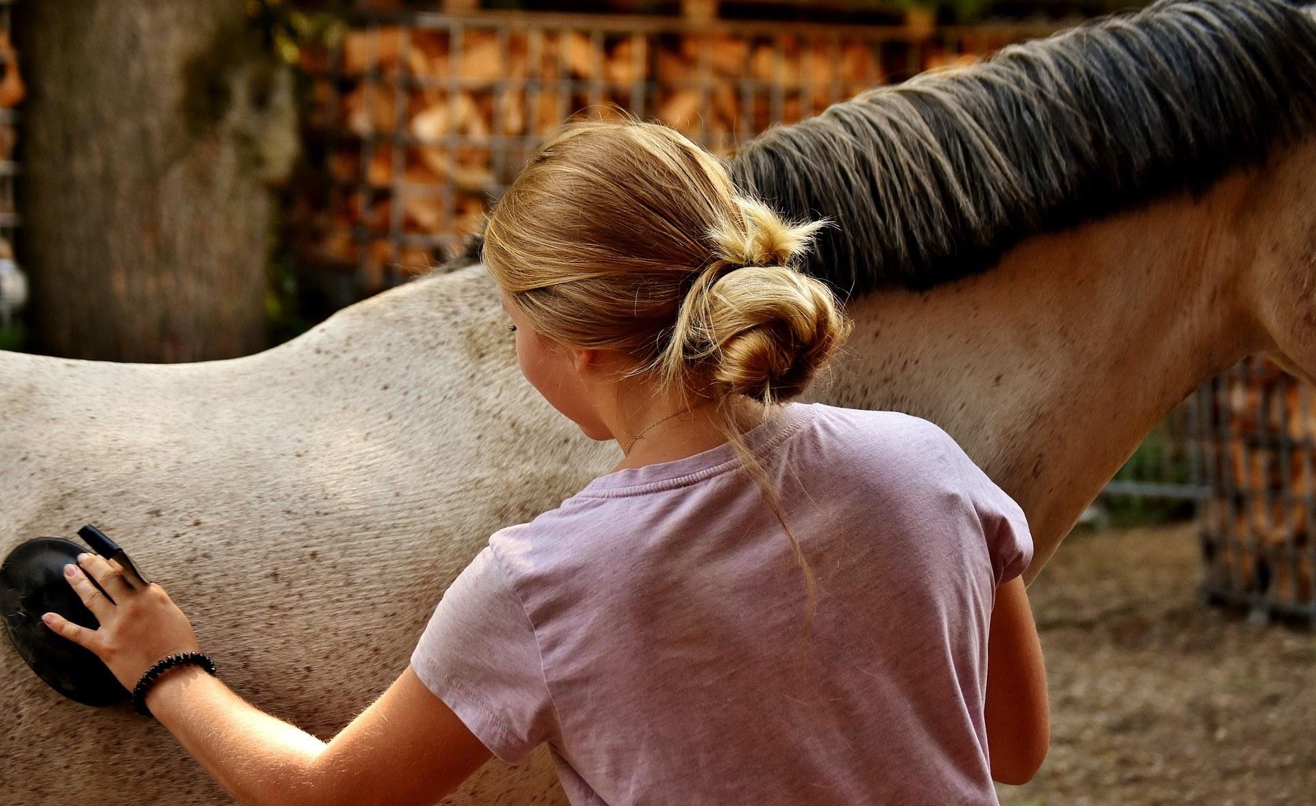 Pferde werden nicht gerne geputzt
