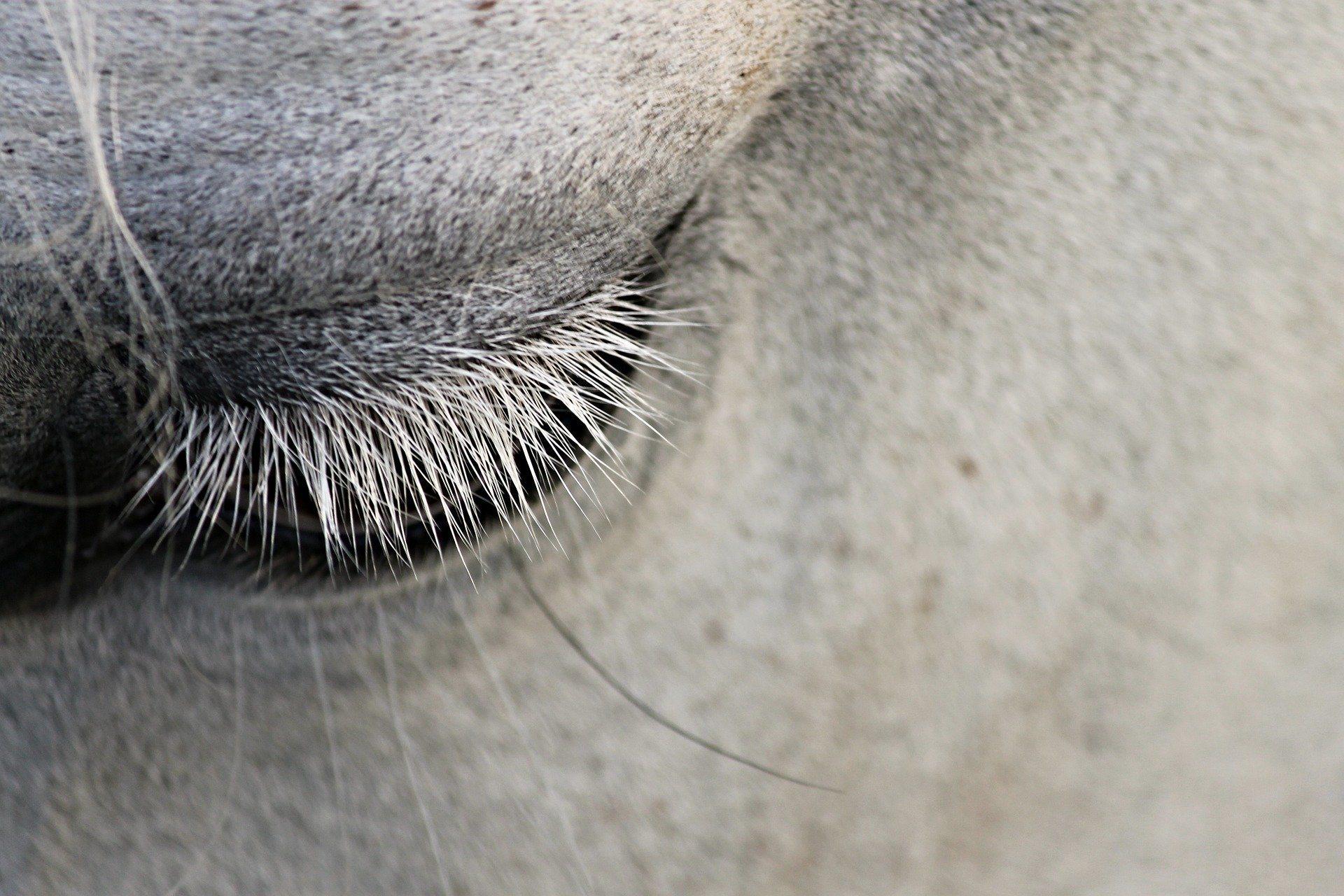 Stress an den Augen des Pferdes erkennen