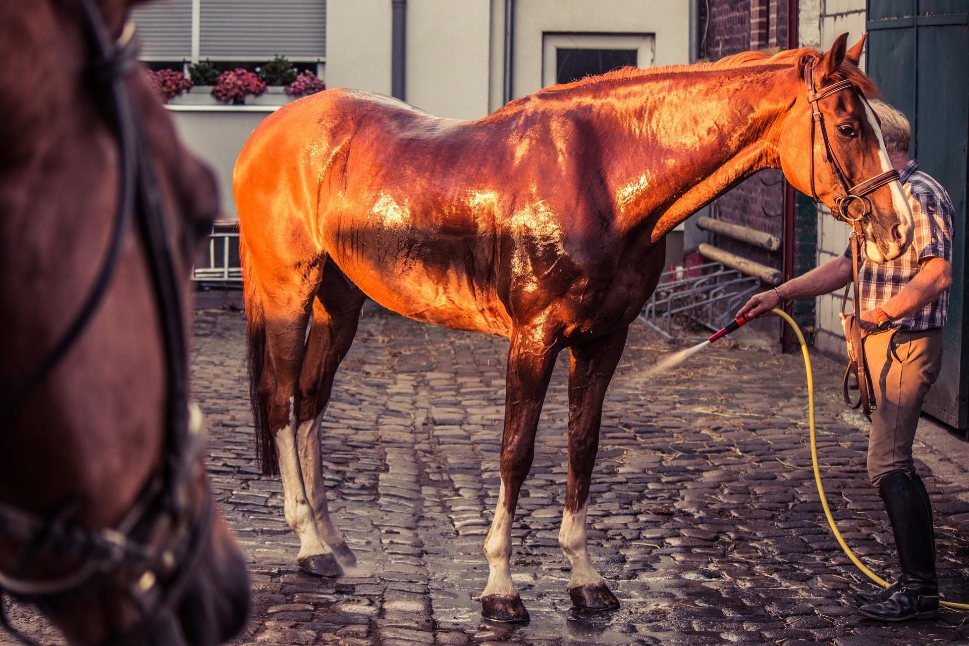 kühlen pferdebeine
