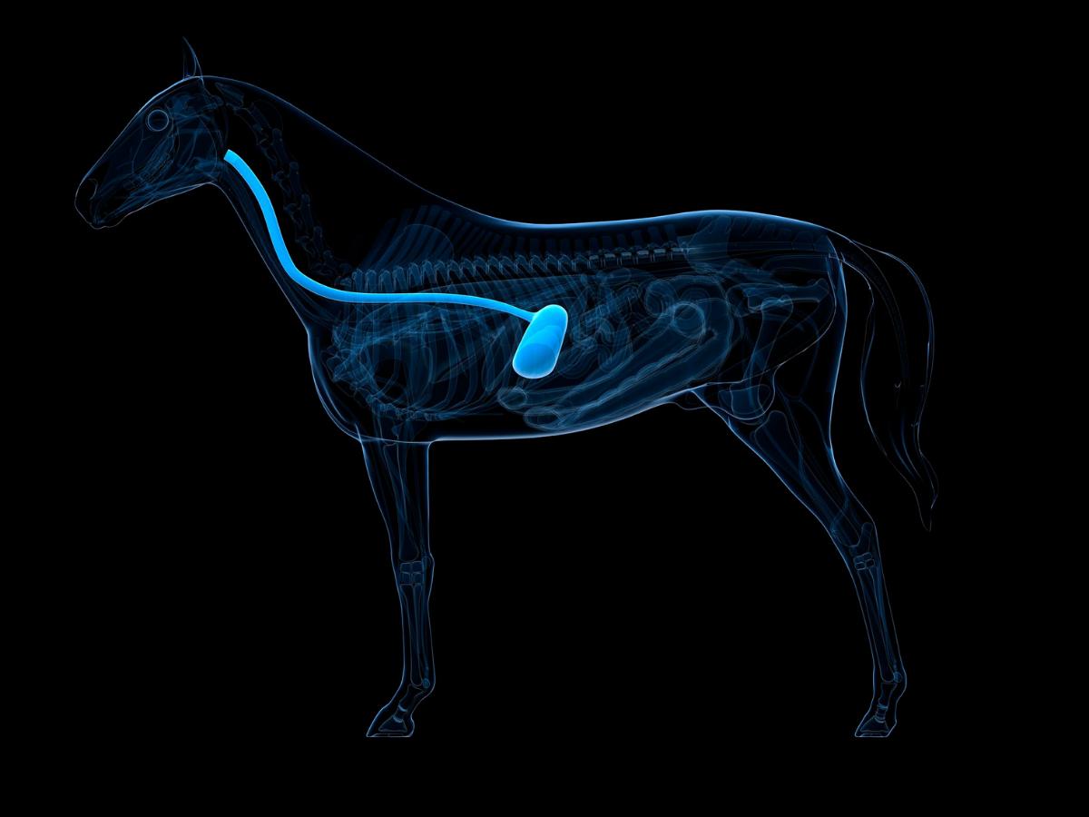 Wissenschaftliche Studien über Pferde