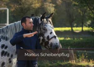 Tierarzt Markus Scheibenpflug